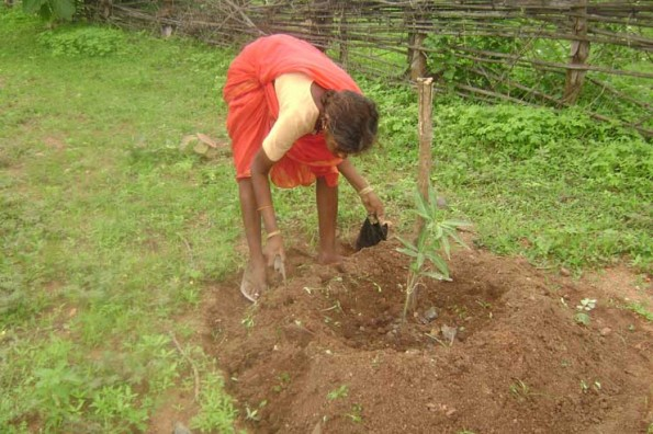 Language is No Barrier Living Ecology Permaculture Internships