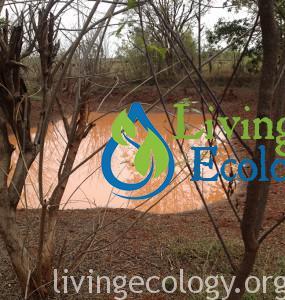 herbal medicine forest water harvesting
